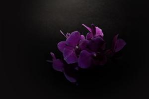 Flowers_Nina_002