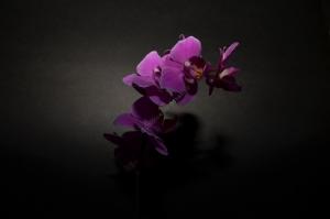 Flowers_Nina_003