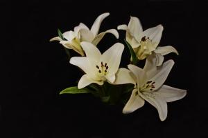 Flowers_Nina_004