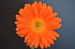 Flowers_Nina_005