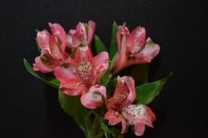 Flowers_Nina_006