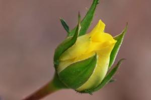 Flowers_Nina_008
