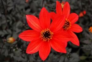 Flowers_Nina_009