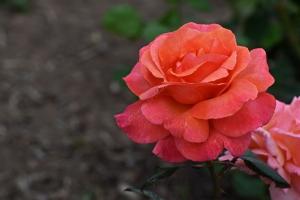 Flowers_Nina_010
