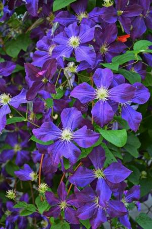 Flowers_Nina_012
