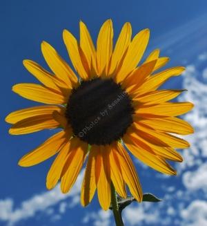Flowers_Nina_014