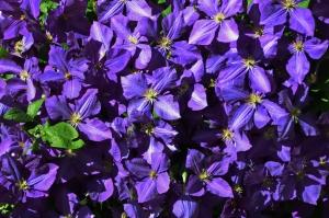 Flowers_Nina_015