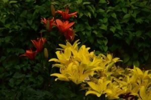 Flowers_Nina_016