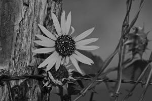 Flowers_Nina_017