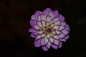 Flowers_Nina_018