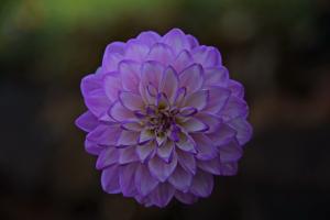 Flowers_Nina_019