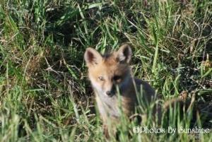 0004_nm_wildlife