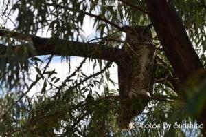 0028_nm_wildlife