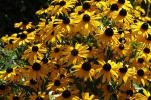 Tammy Flowers 1001