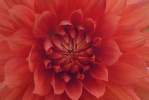 Tammy Flowers 1004