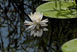 Tammy Flowers 1005