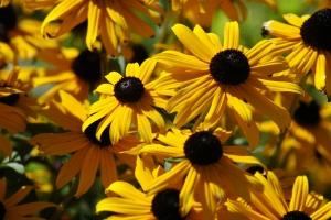 Tammy Flowers 1006