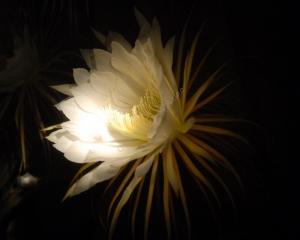 Tammy Flowers 1008
