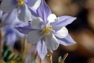 Tammy Flowers 1009
