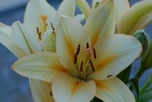 Tammy Flowers 1013
